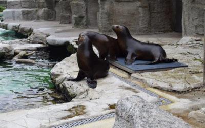 Ausflug in den Tiergarten Schönbrunn