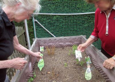 Gartenkräuterlehre